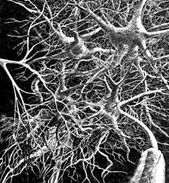 D'où viens-je ? Qui suis-je ? Où vais-je ? Neurones